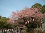 上野桜 (Small).JPG