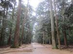 鹿島の森.JPG